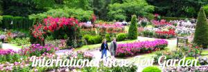 International Rose Test Garden image courtesy RoseGardenStore.org