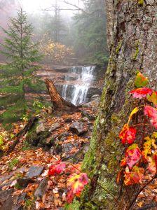 Falling Waters Trail
