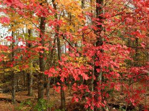 Fall Palette near Smuggler's notch